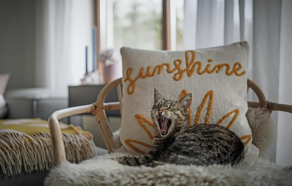 Picture cat, house, chair