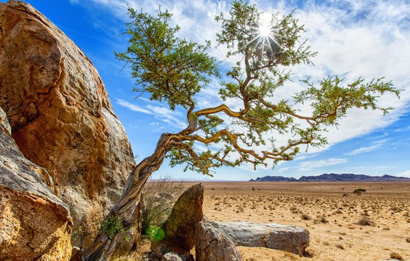 Picture the sky, the sun, tree, Africa, Namibia