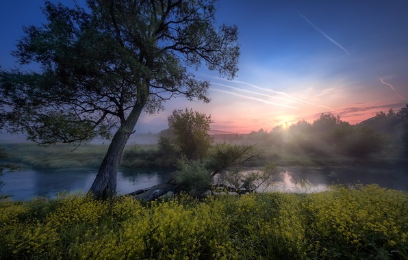 Picture the sun, rays, trees, landscape, nature, fog, river, dawn, morning, grass, Bank, Istra, Andrei