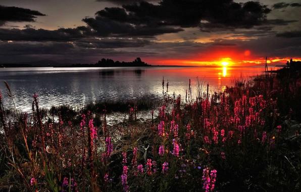 Picture Sunset, Flowers, Lake, Shore, Clouds, Dawn, Shine, Okoem, Loosestrife Loosestrife, Plakun-Grass