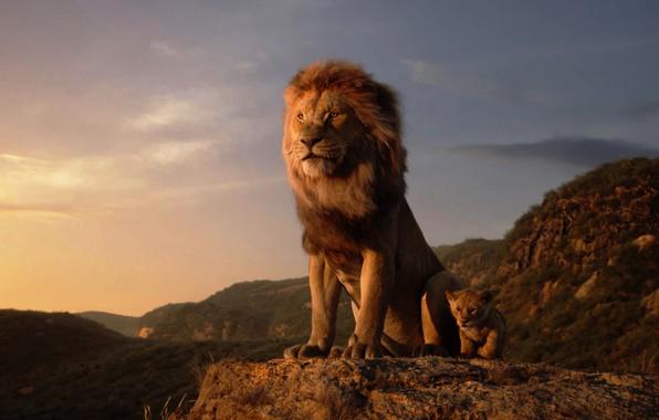 Picture The Lion King, Walt Disney Pictures, Jon Favreau, A remake