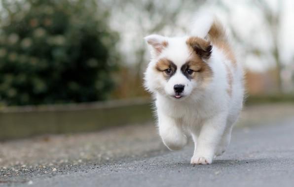 Picture dog, puppy, walk, bokeh