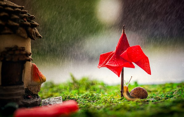 Picture drops, macro, red, umbrella, rain, snail, umbrella, canopy, house, toy, bad weather