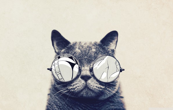 Picture cat, animals, glasses