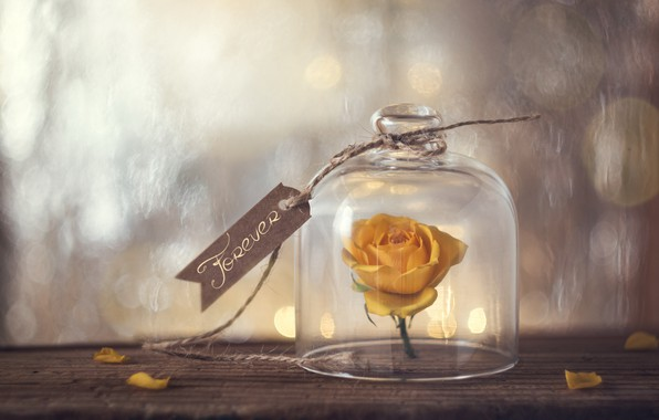 Picture flower, window, forever