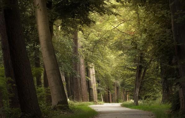 Picture summer, nature, Park