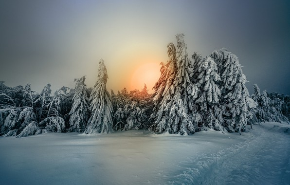 Picture winter, forest, the sky, snow, trees, tree, frost, Robert Didierjean