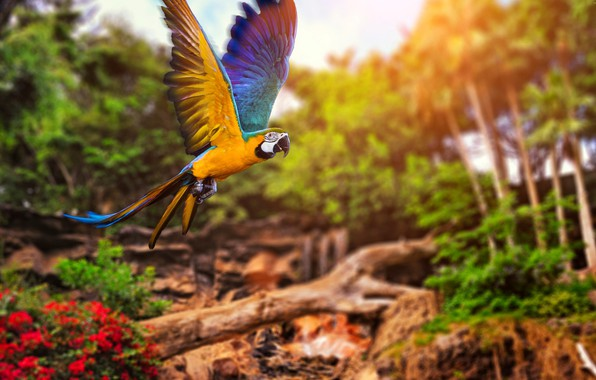 Picture colors, colorful, trees, nature, bird, bokeh, animal, Parrot, depth of field