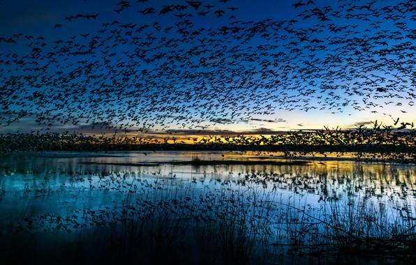 Picture birds, nature, lake