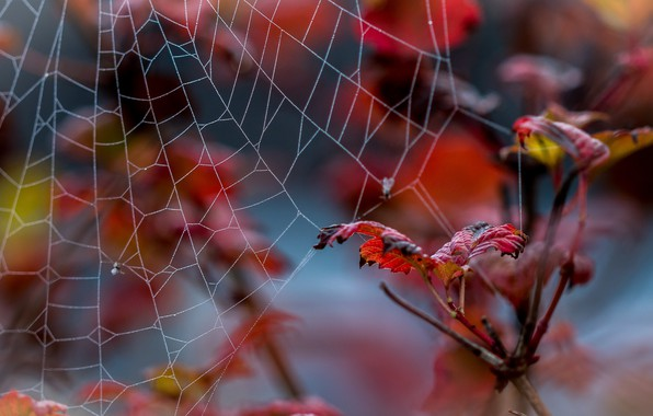 Picture leaves, photo, web, branch