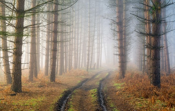 Picture road, forest, fog, haze