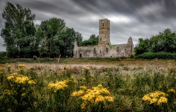 Picture field, grass, trees, flowers, clouds, castle, glade, yellow, meadow, ruins, gloomy sky