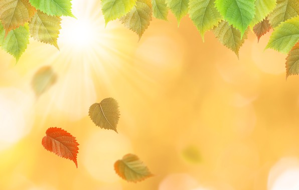 Picture autumn, leaves, yellow, colorful, yellow, autumn, leaves, autumn