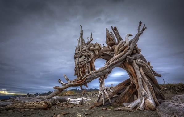 Picture nature, tree, sculpture, Beach Ent