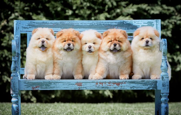 Picture language, dogs, summer, bench, branches, nature, pose, Park, lawn, puppies, shop, puppy, fluffy, kids, company, ...