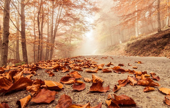 Picture road, autumn, leaves, fog