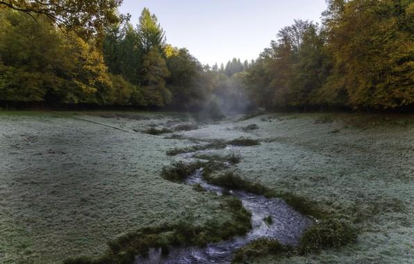 Picture nature, fog, river