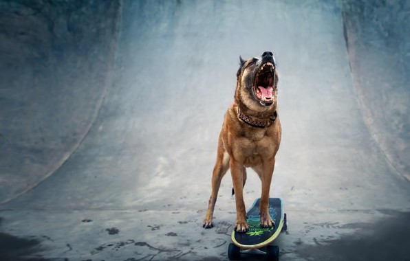 Picture each, dog, skateboard