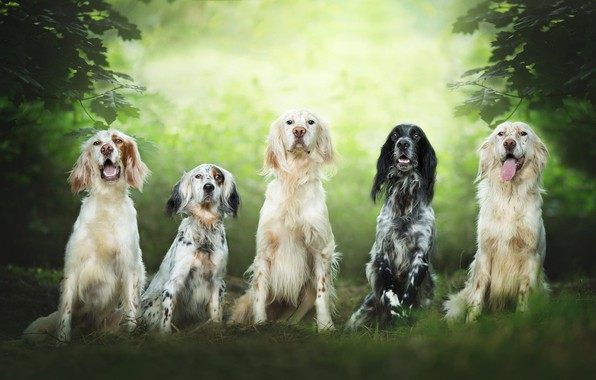 Picture dogs, summer, look, leaves, branches, nature, team, company, friends, a lot, green background, muzzle, sitting, …