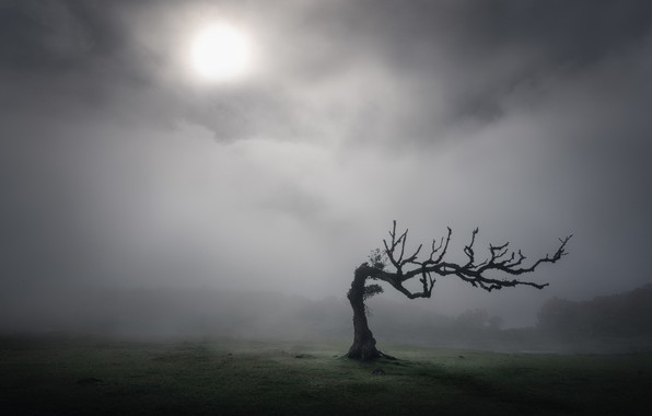 Picture tree, The sun, tree, sun, Kai Hornung