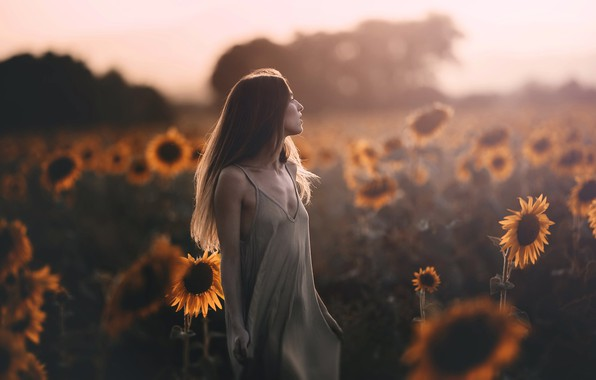 Picture field, summer, girl, sunflowers