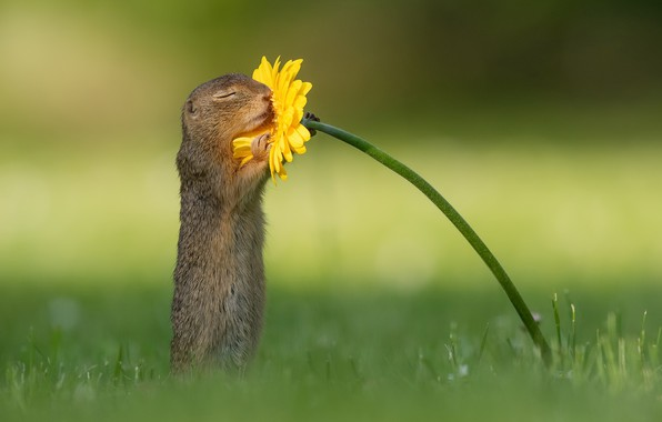 Picture flower, nature, squirrel, wildlife, smell