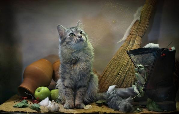 Picture cat, cat, look, leaves, animal, apples, web, burlap, garlic, boots, wool, pot, broom, Kovaleva Svetlana, …