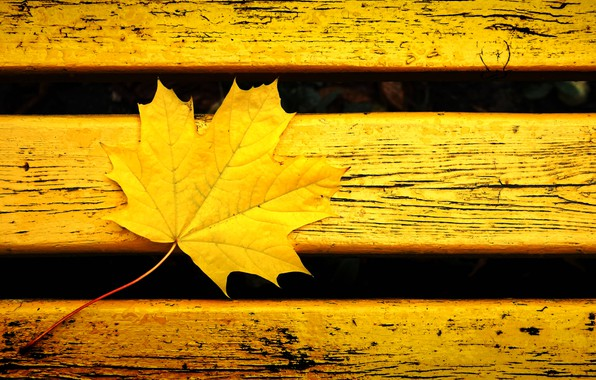 Picture autumn, bench, yellow, sheet, background, mood, color, yellow leaf, waiting for the new, maple in …