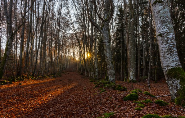 Picture road, forest, morning