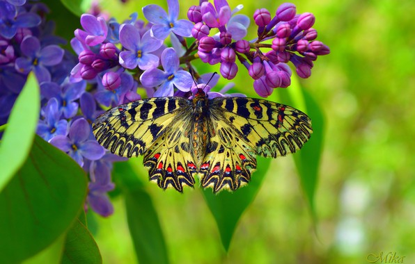 Picture Macro, Spring, Butterfly, Spring, Macro, Butterfly
