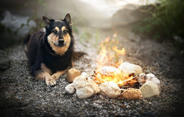 Picture each, dog, the fire