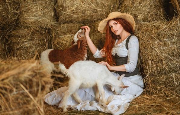 Picture look, girl, hat, hay, red, lamb, redhead, sheep, goat, goat, lamb, Диана Липкина