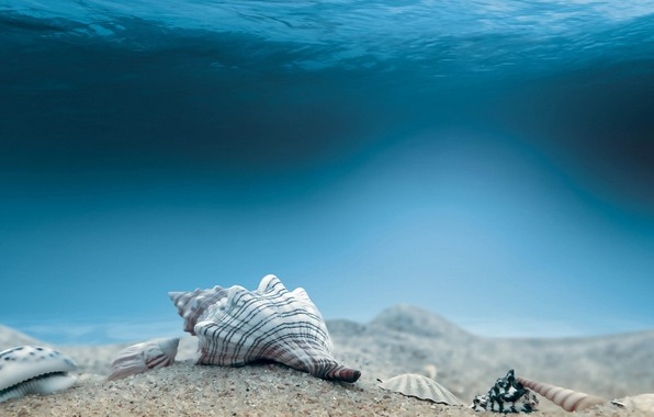 Picture Underwater, Seabed, Mollusca