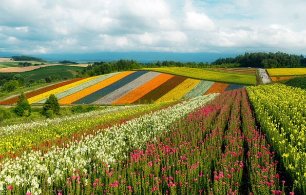 Picture the sky, the sun, clouds, trees, flowers, hills, field, Japan, colorful, Khokkajdo