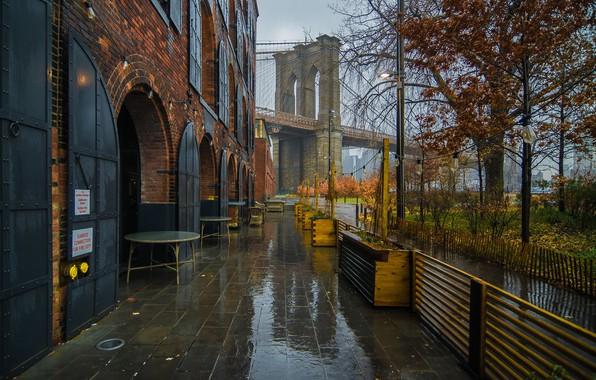 Picture autumn, bridge, rain, tree, New York, cafe, Brooklyn bridge, New York City, Brooklyn Bridge, Brooklyn …