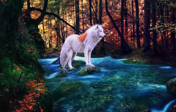 Picture autumn, forest, river, albino, white wolf