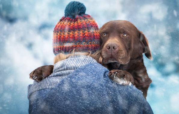 Picture face, girl, snow, hat, dog, Labrador Retriever