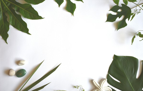 Picture leaves, design, green, plants, tropical