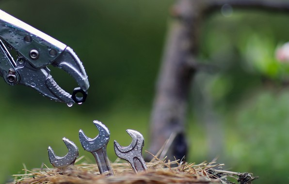 Picture nature, socket, keys, nut
