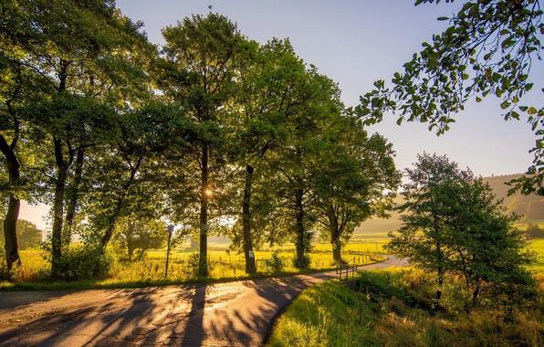 Picture road, landscape, nature, Park, beauty