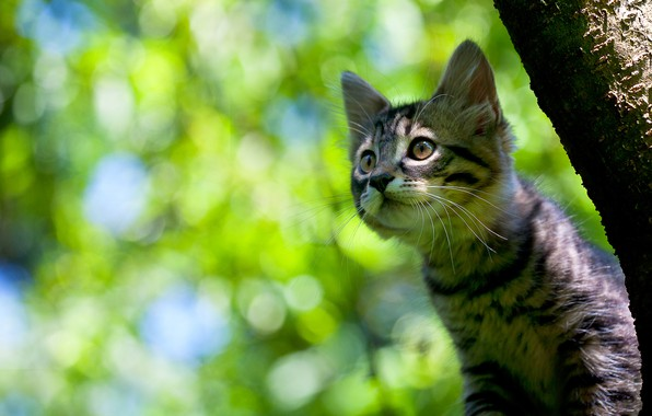 Picture look, background, kitty, cat