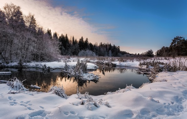Picture winter, forest, snow, trees, landscape, sunset, traces, nature, river, the snow