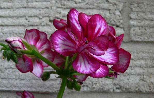 Picture macro, wall, plant, petals