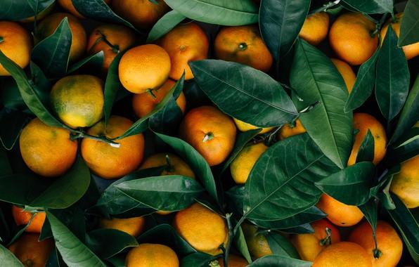 Picture Leaves, Mandarin, Fruits, Food, Oranges, Citrus, Mandarin oranges