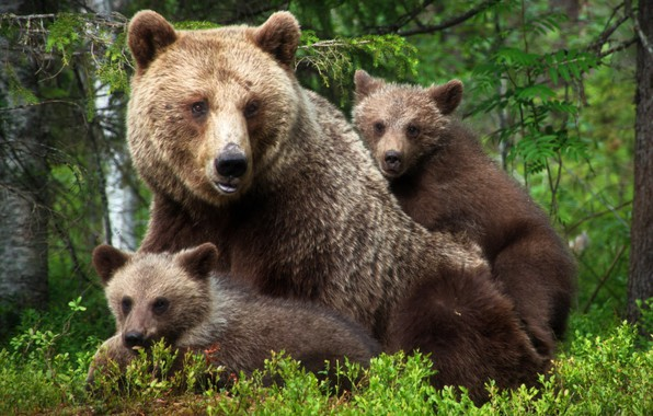 Picture family, kids, bears, mom, bear