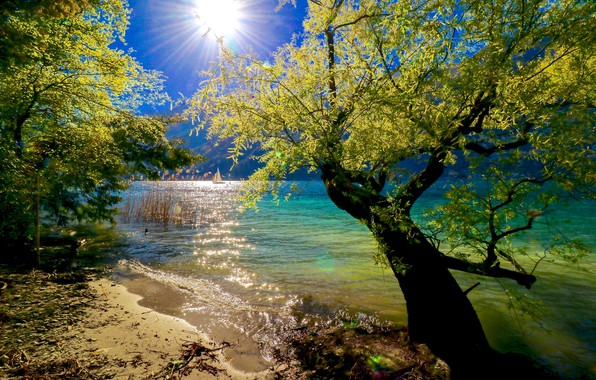 Picture trees, lake, sunlight