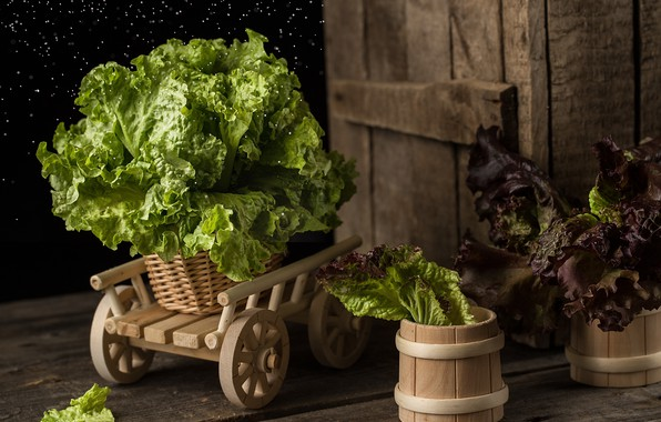 Picture leaves, green, truck, still life, salad