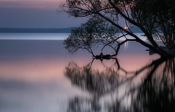 Picture landscape, night, branches, nature, lake, reflection, tree, bird, duck, dawn, Andrei, Pereslavl-Zalesskiy, Plescheevo lake