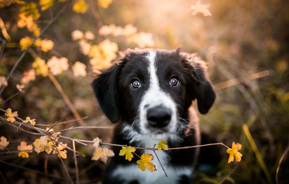 Picture autumn, look, leaves, branches, nature, pose, background, black and white, Bush, portrait, dog, baby, cute, …