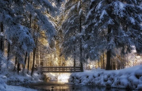 Picture winter, snow, trees, landscape, nature, Park, ice, river, the bridge, Rudi Moerkl